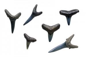 shark-teeth-2